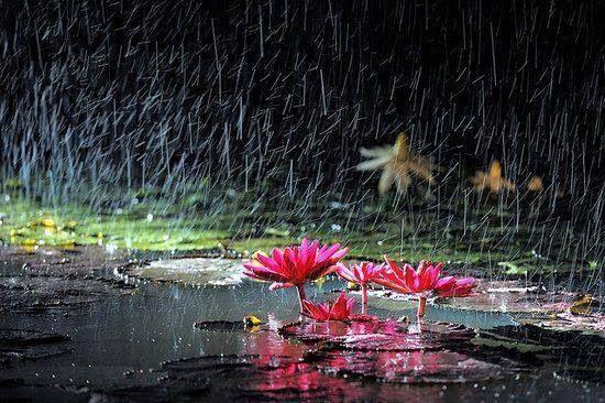 gentle-rain